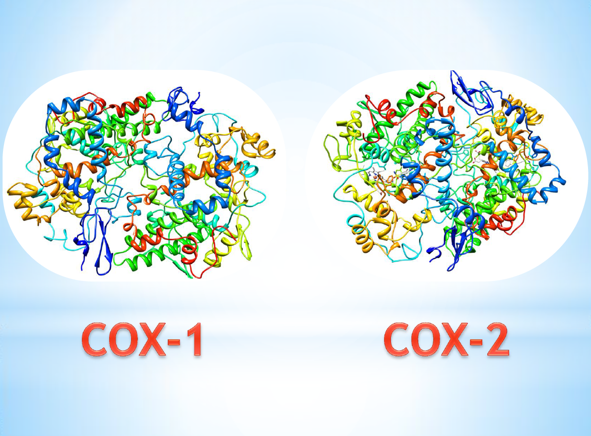 Enzyme COX
